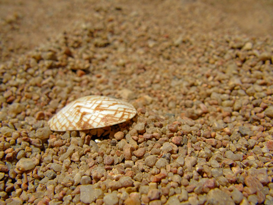 cockle-shell-571905_960_720